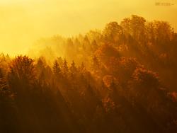 Švýcarský les