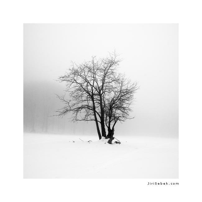 fotografie Samotář