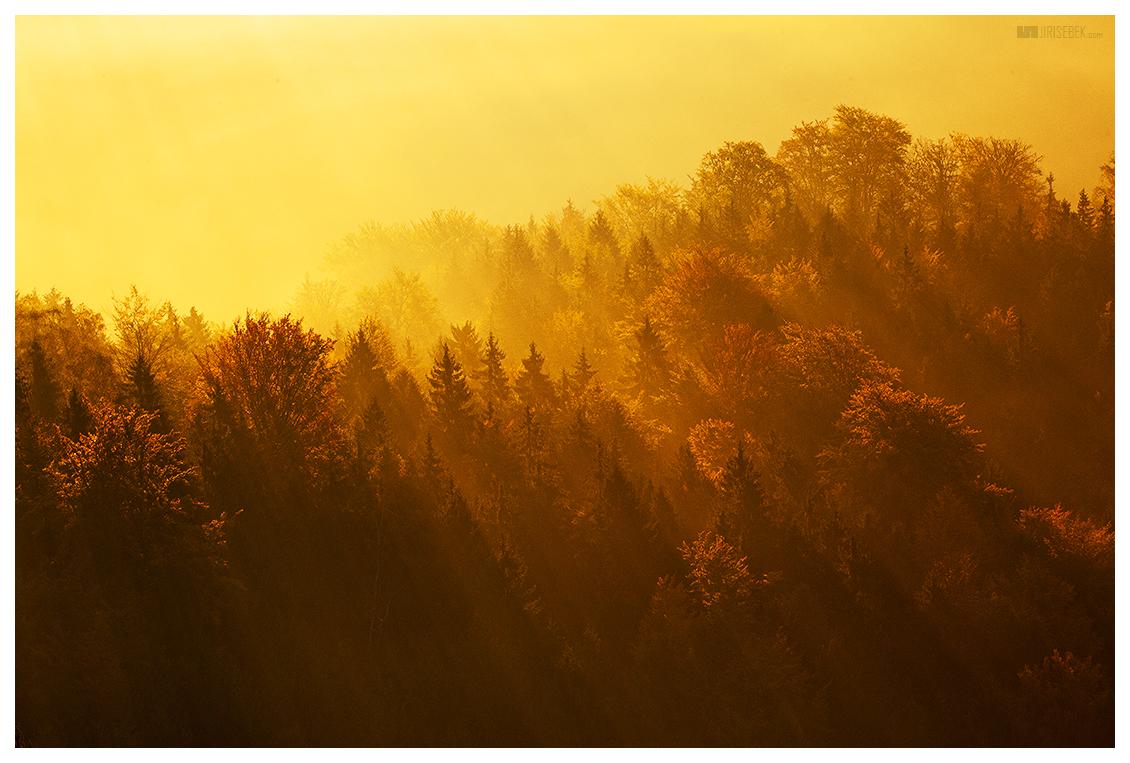 fotografie Švýcarský les