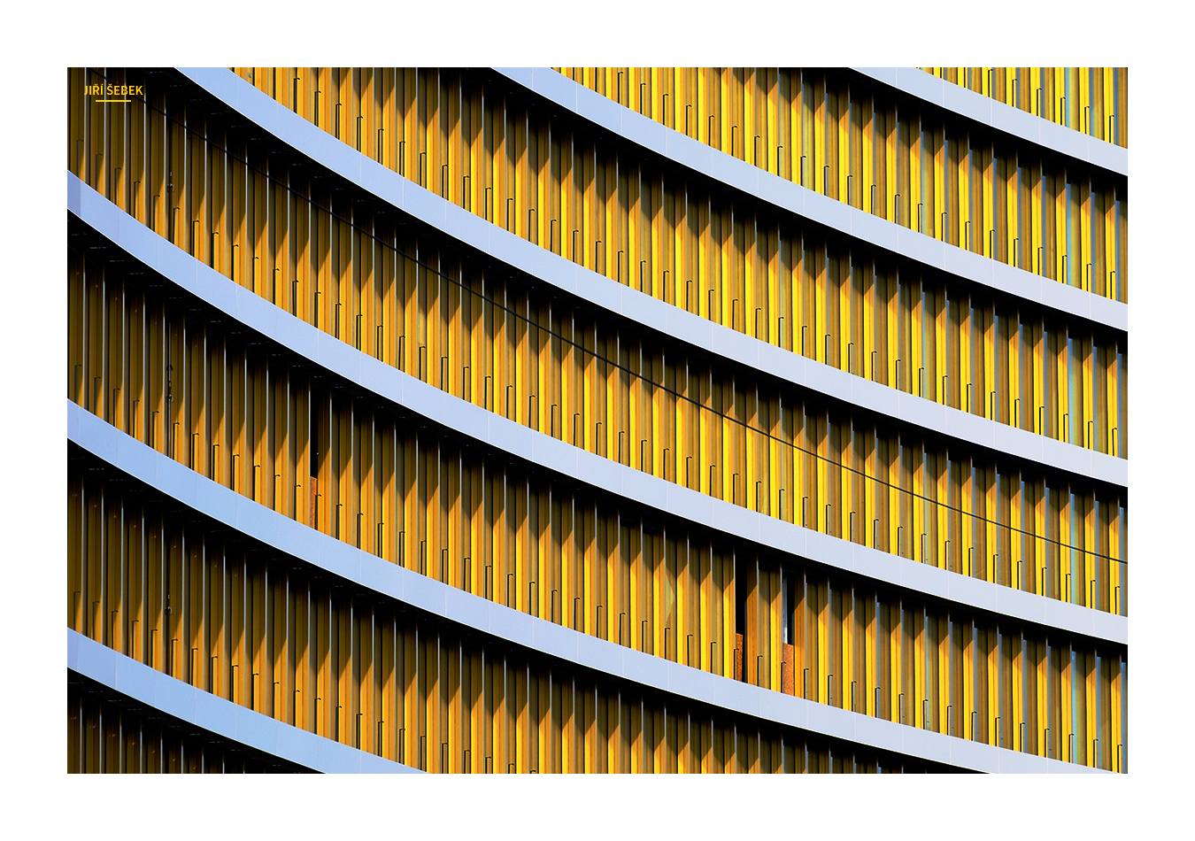fotografie Žlutá