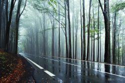 fotografie silnice v lese