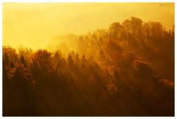fotografie Les v Českém Švýcarsku