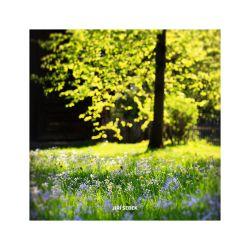 fotografie Zlatý strom