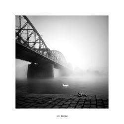 fotografie Labut pod mostem