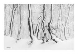 fotografie Magický bílý les v Krušných horách