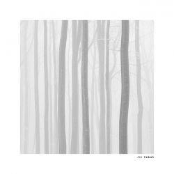 fotografie Stromy, České Švýcarsko