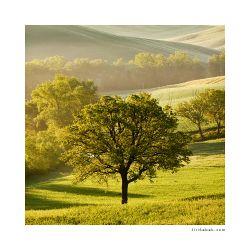 fotografie Strom v Toskánsku