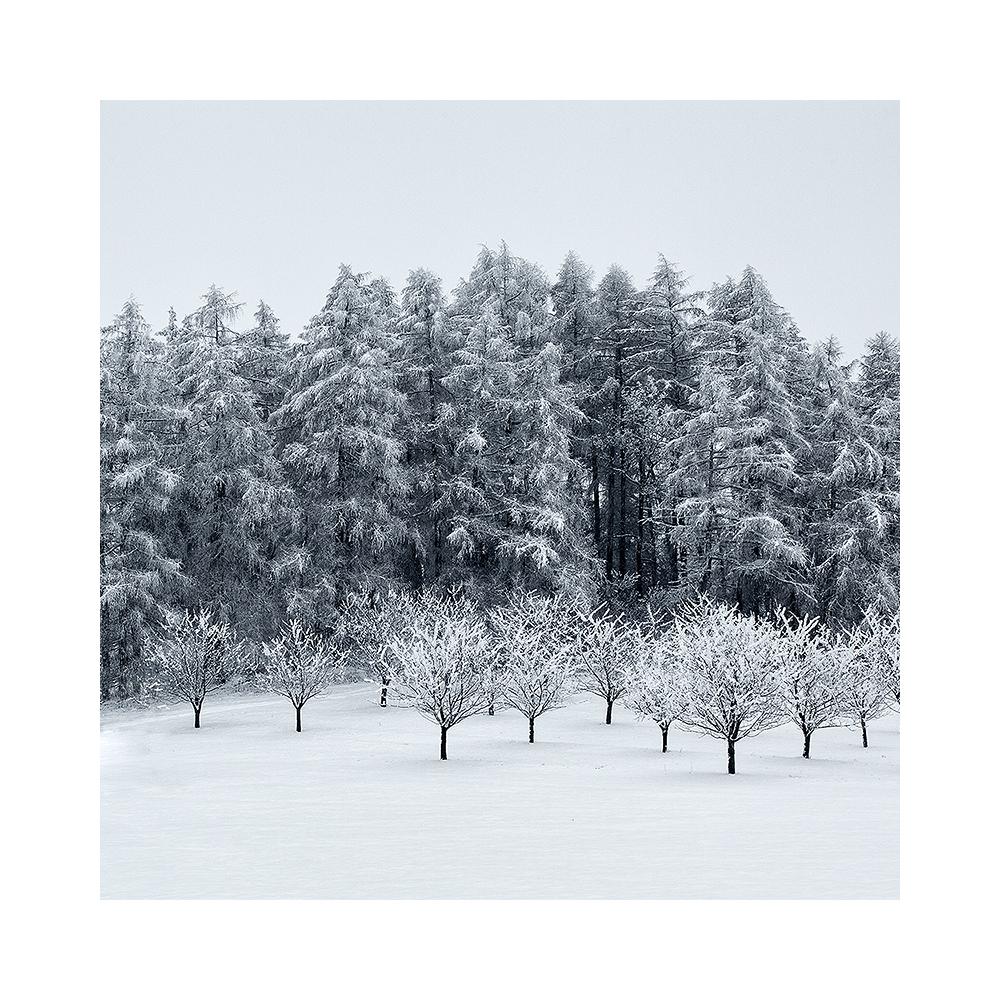 fotografie Zimní les