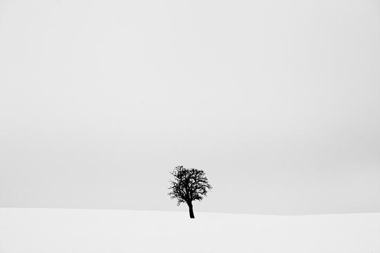 Strom v ohni